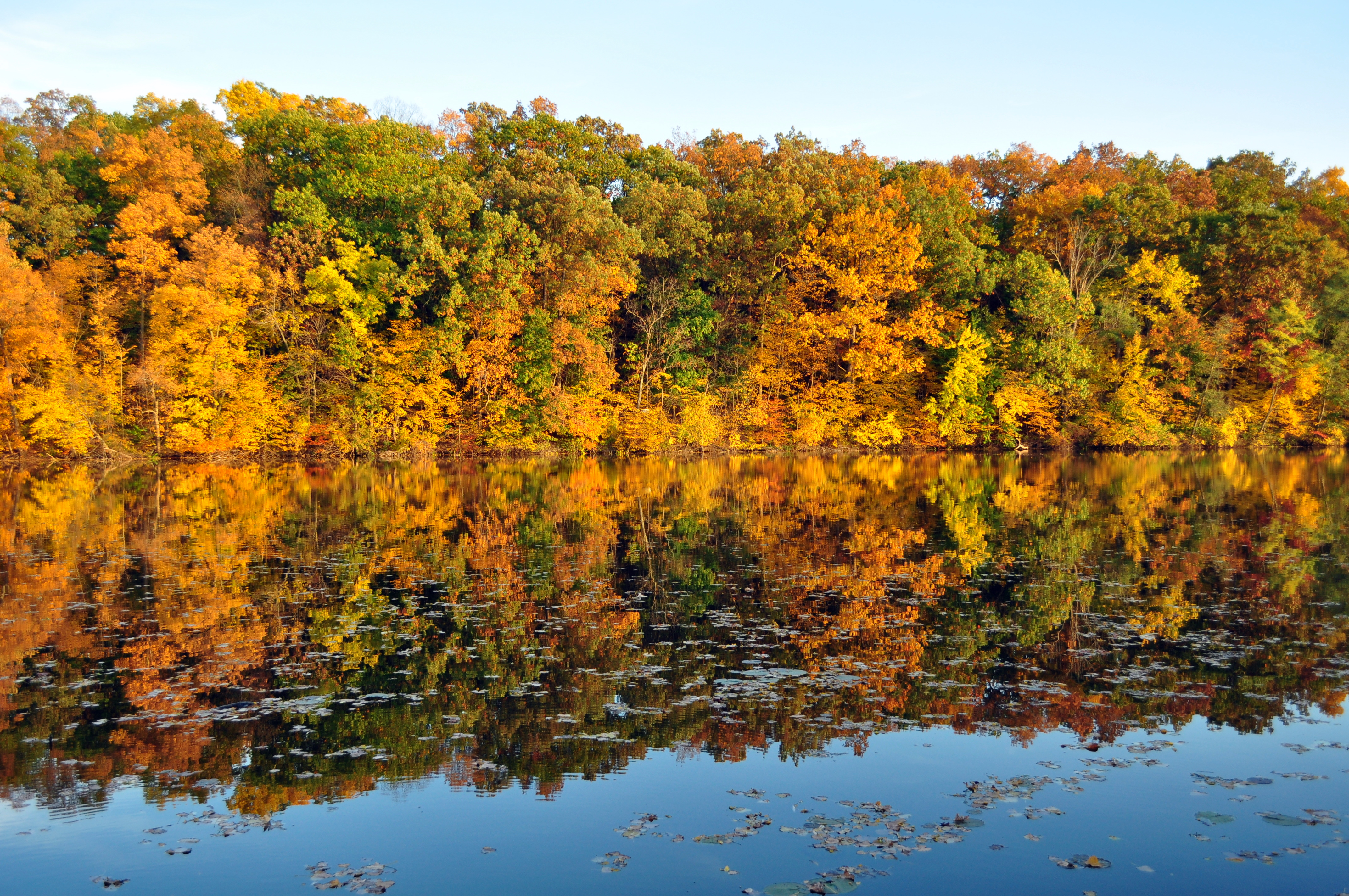 Fall Leaves on the River in Ann Arbor