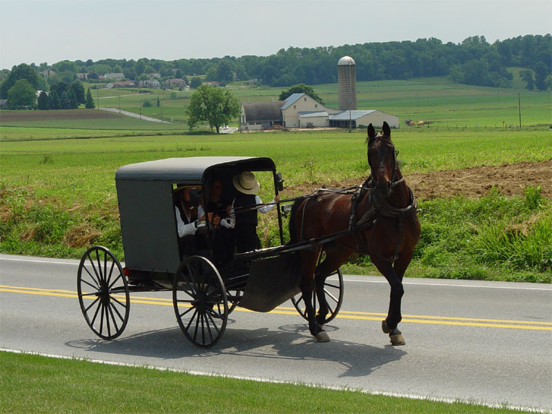 Horsedrawn Amish Buggy in Lancaster County