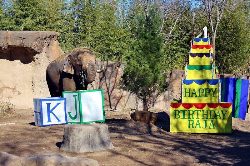 Elephant Birthday Decorations at the Zoo