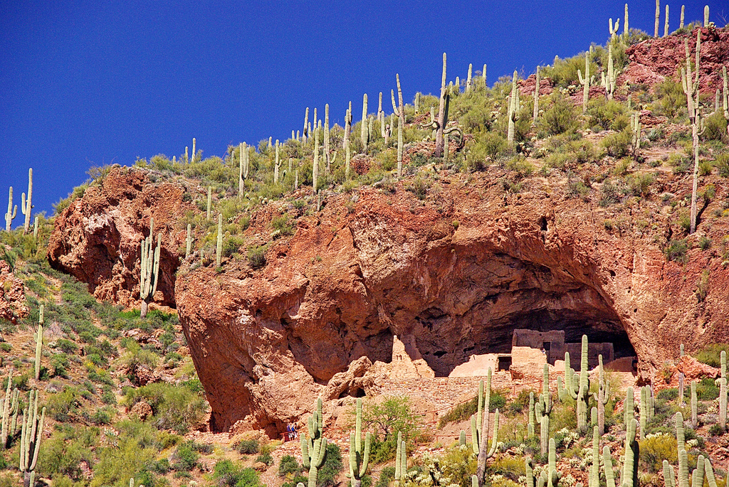 Cliff Dwellings Surrounded by Saguaro Cacti