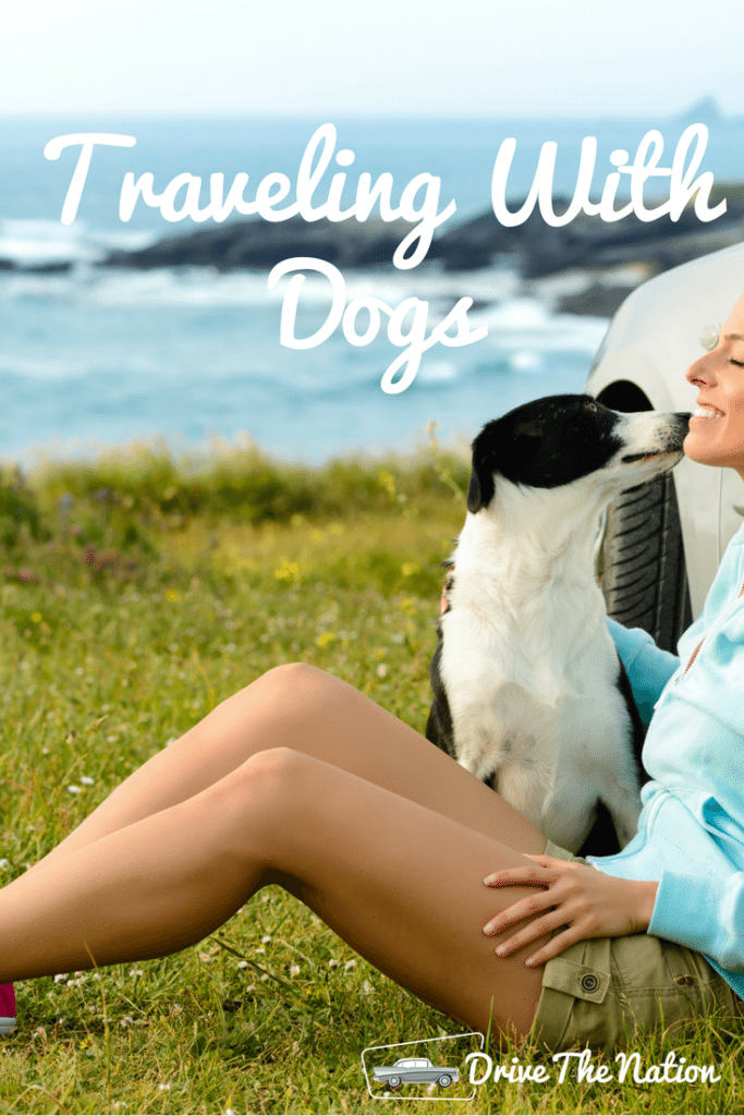 Should I Travel With My Dog?