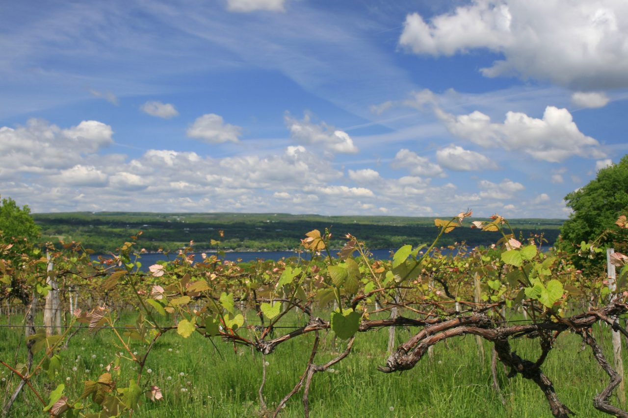 The Finger Lakes Of Upstate New York