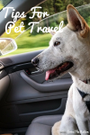Tips For Pet Travel