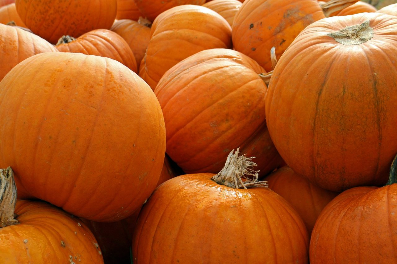 Top Pumpkin Patches In The U.S.