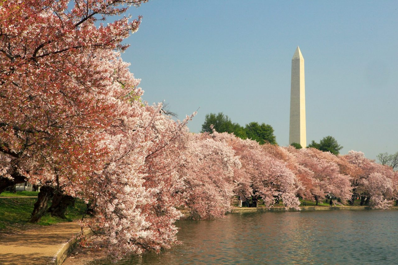 Free Things To Do In D.C.
