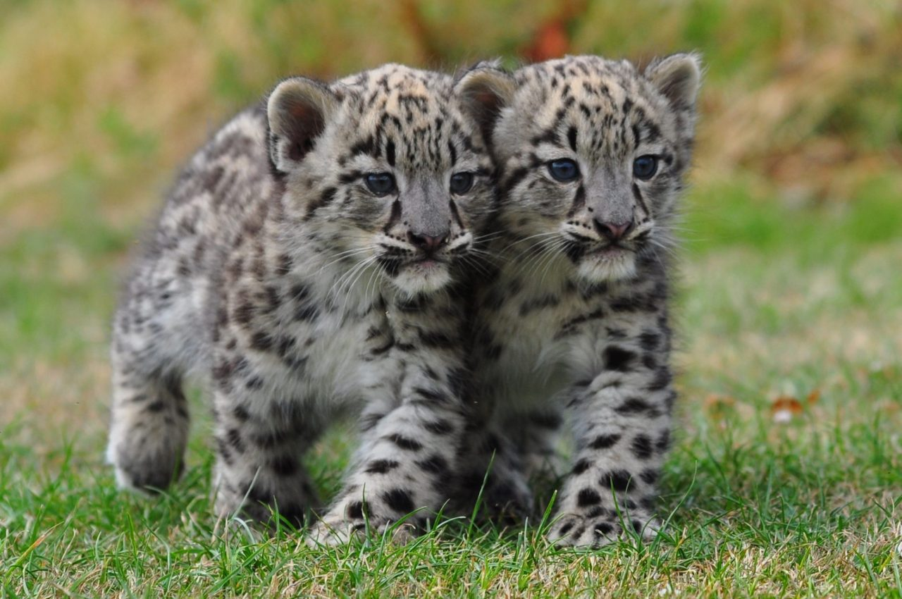 Get Your Squee On With Baby Zoo Animals