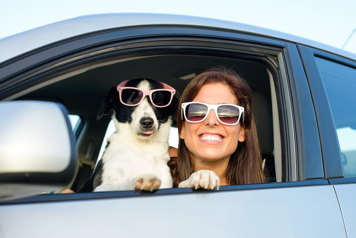 Video: Traveling With Your Pet
