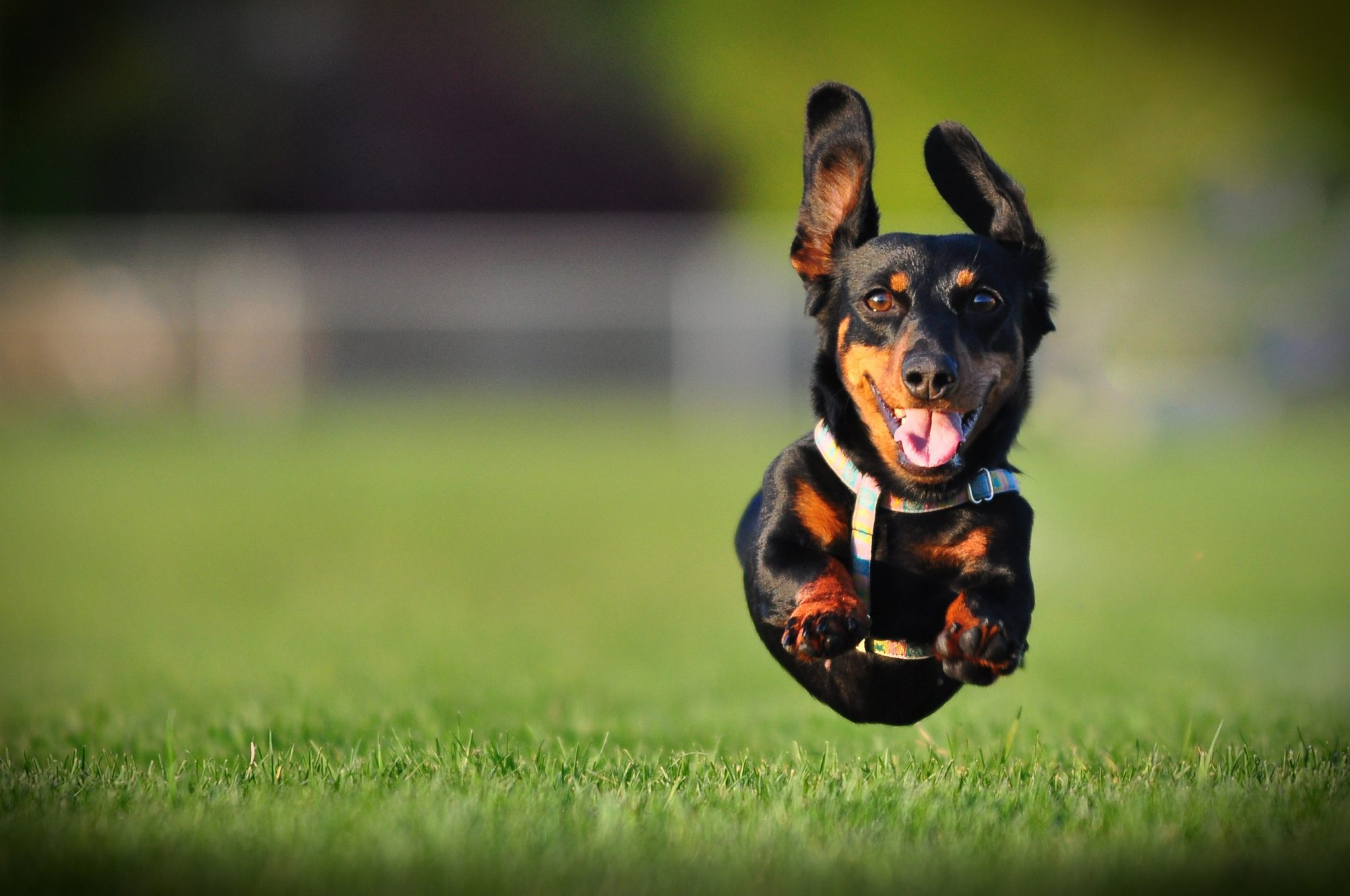 Best Dog Parks in America