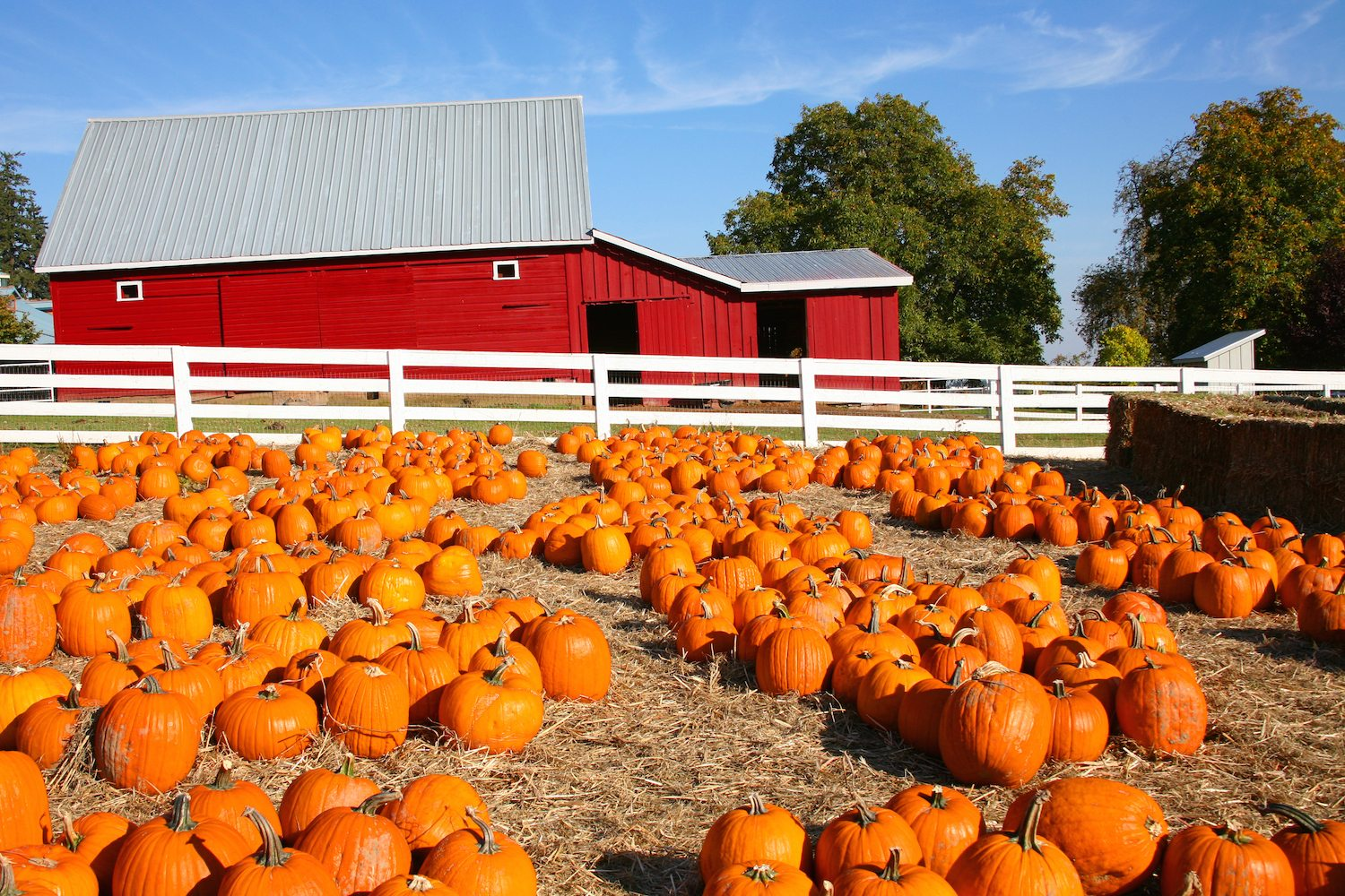 Largest Pumpkin Patches in the U.S.