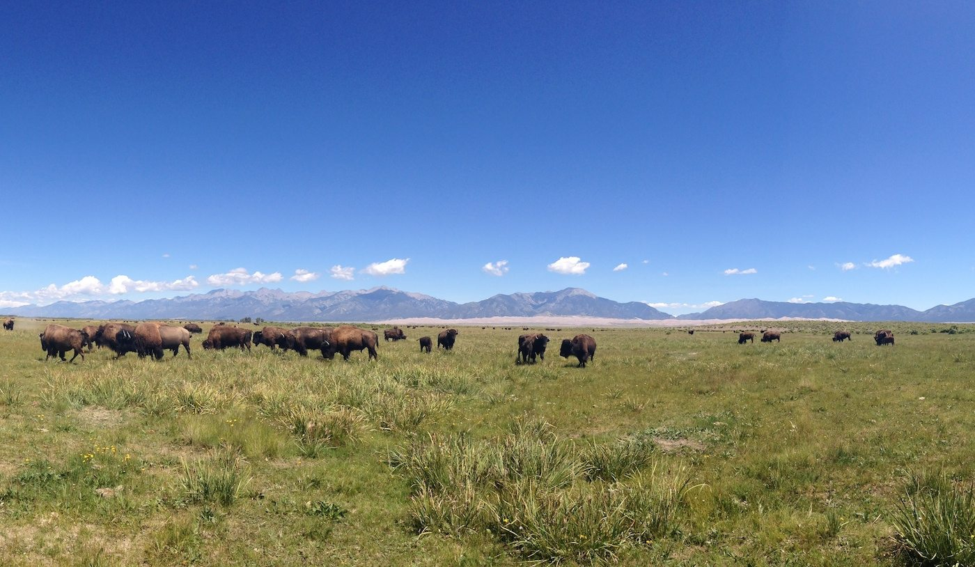 Embark on a Bison Tour