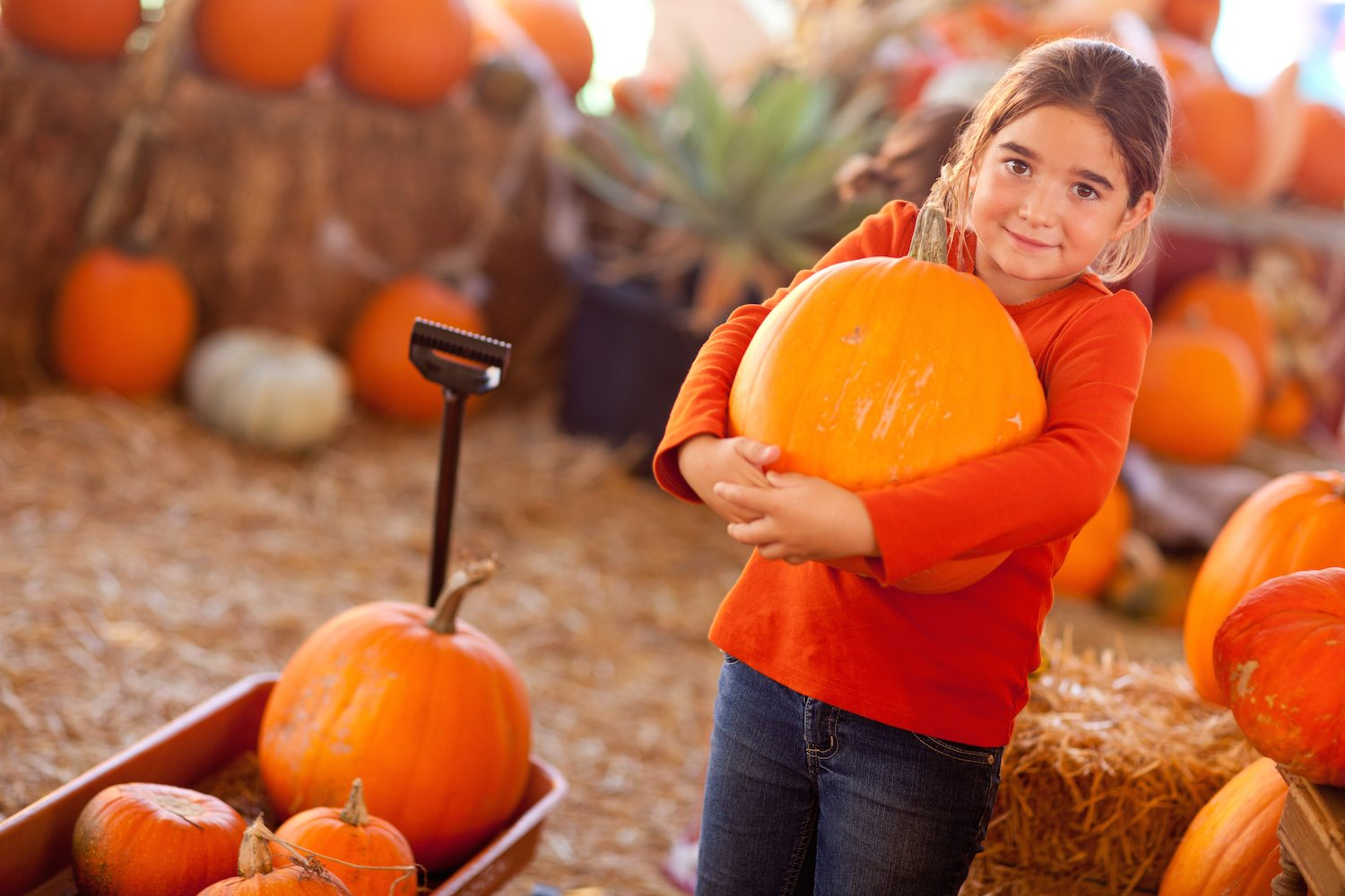 The South's Favorite (and FREE!) Fall Festivals