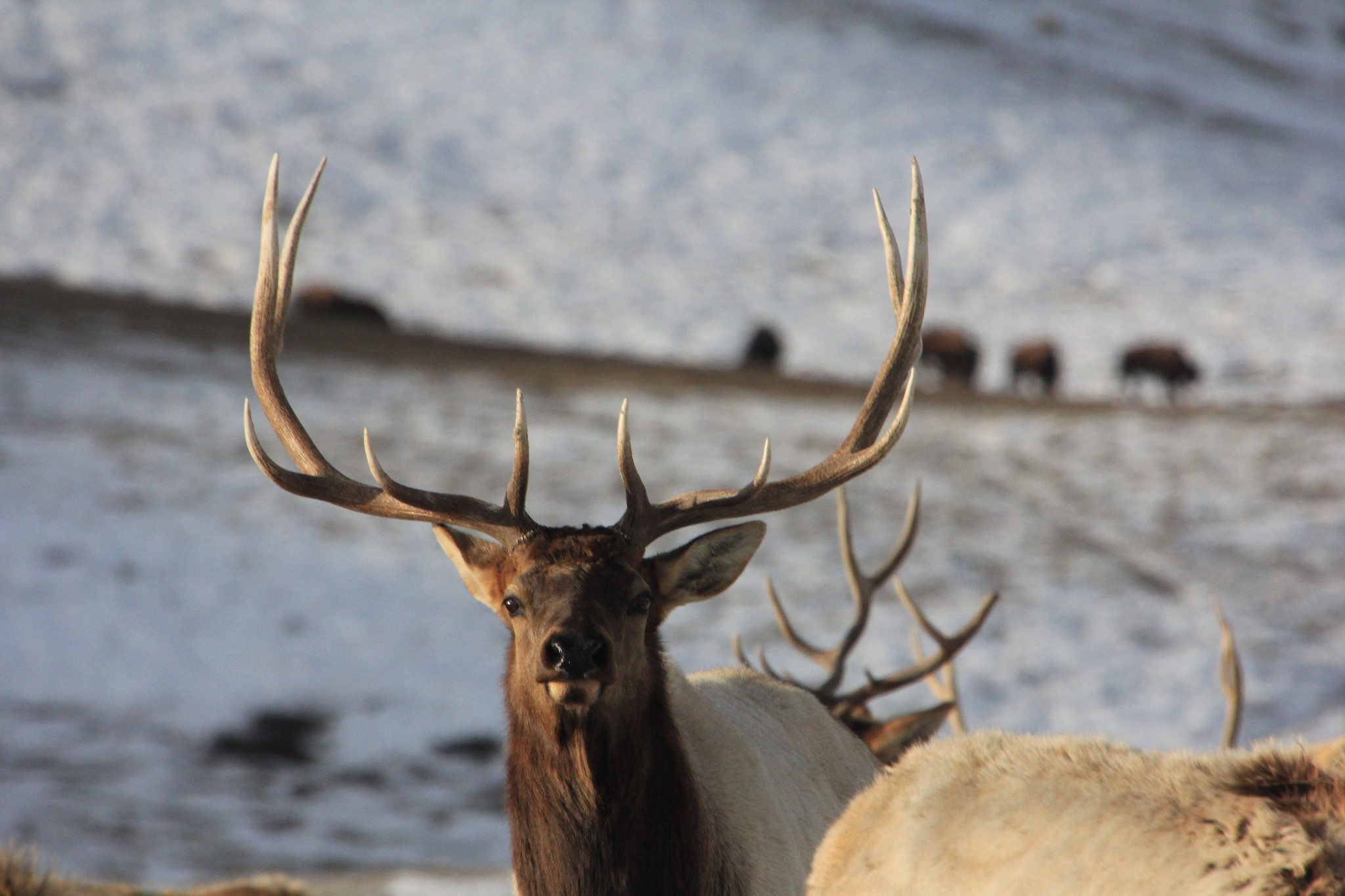 Explore the National Elk Refuge