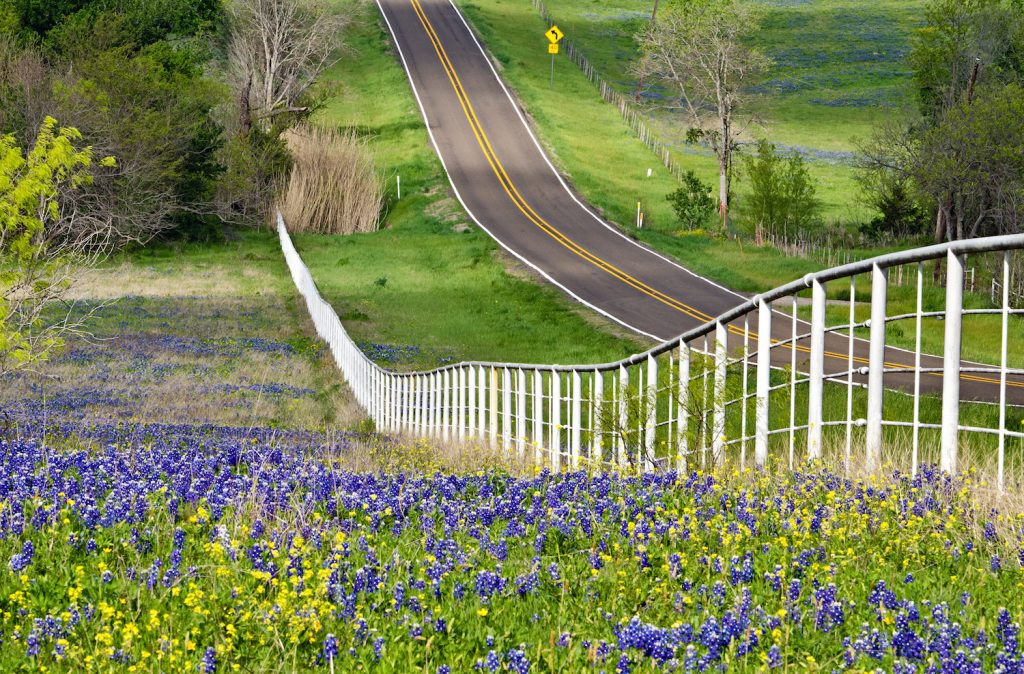 Bluebonnets Trail in Texas