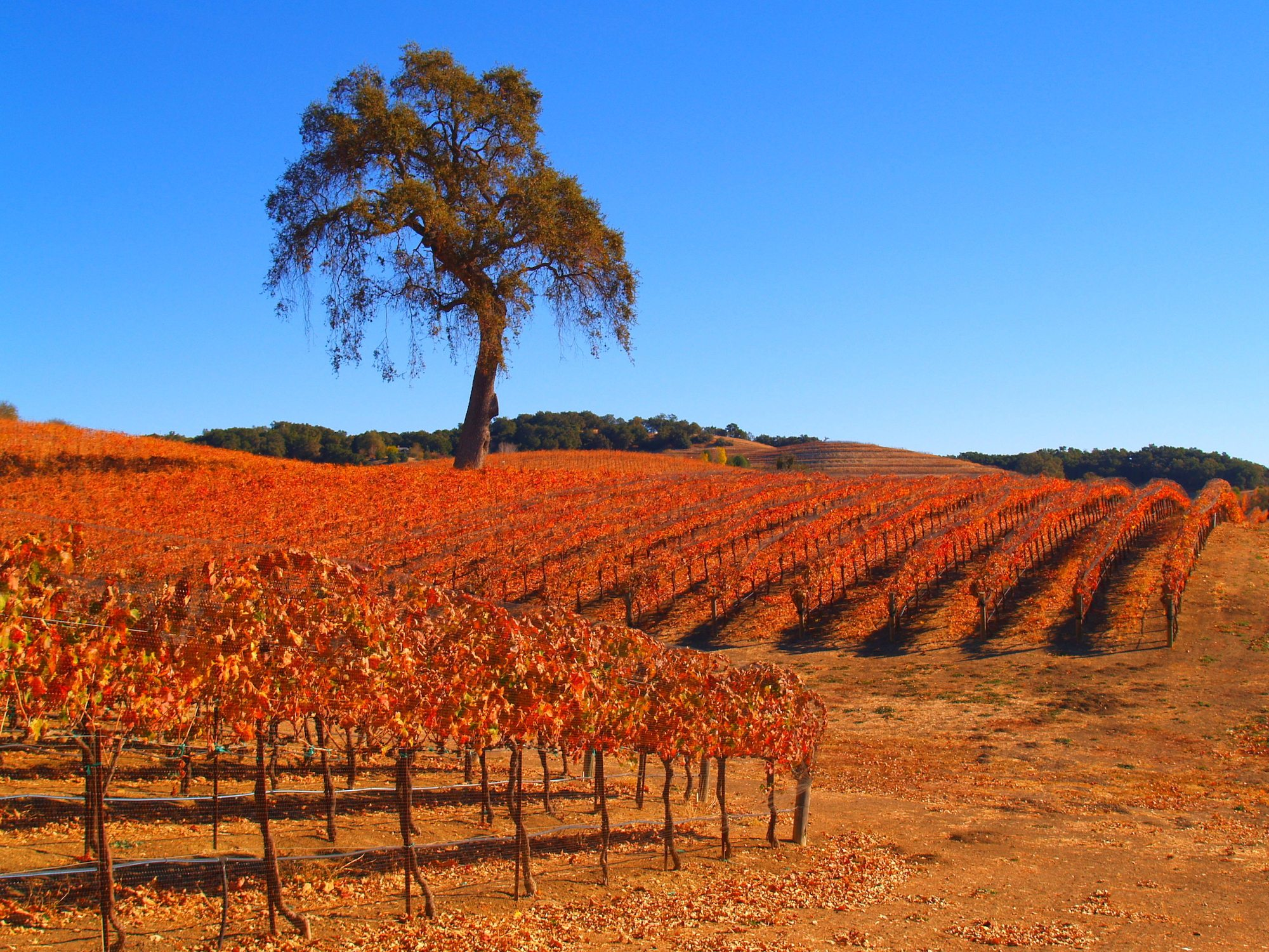 Road Trip to the Hidden (and Spectacular) California Coastal Wine Country