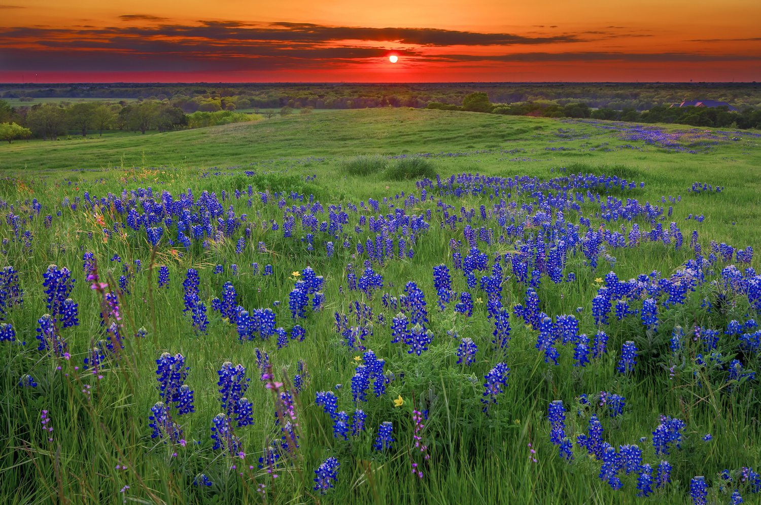 Bluebonnet Trail Road Trip