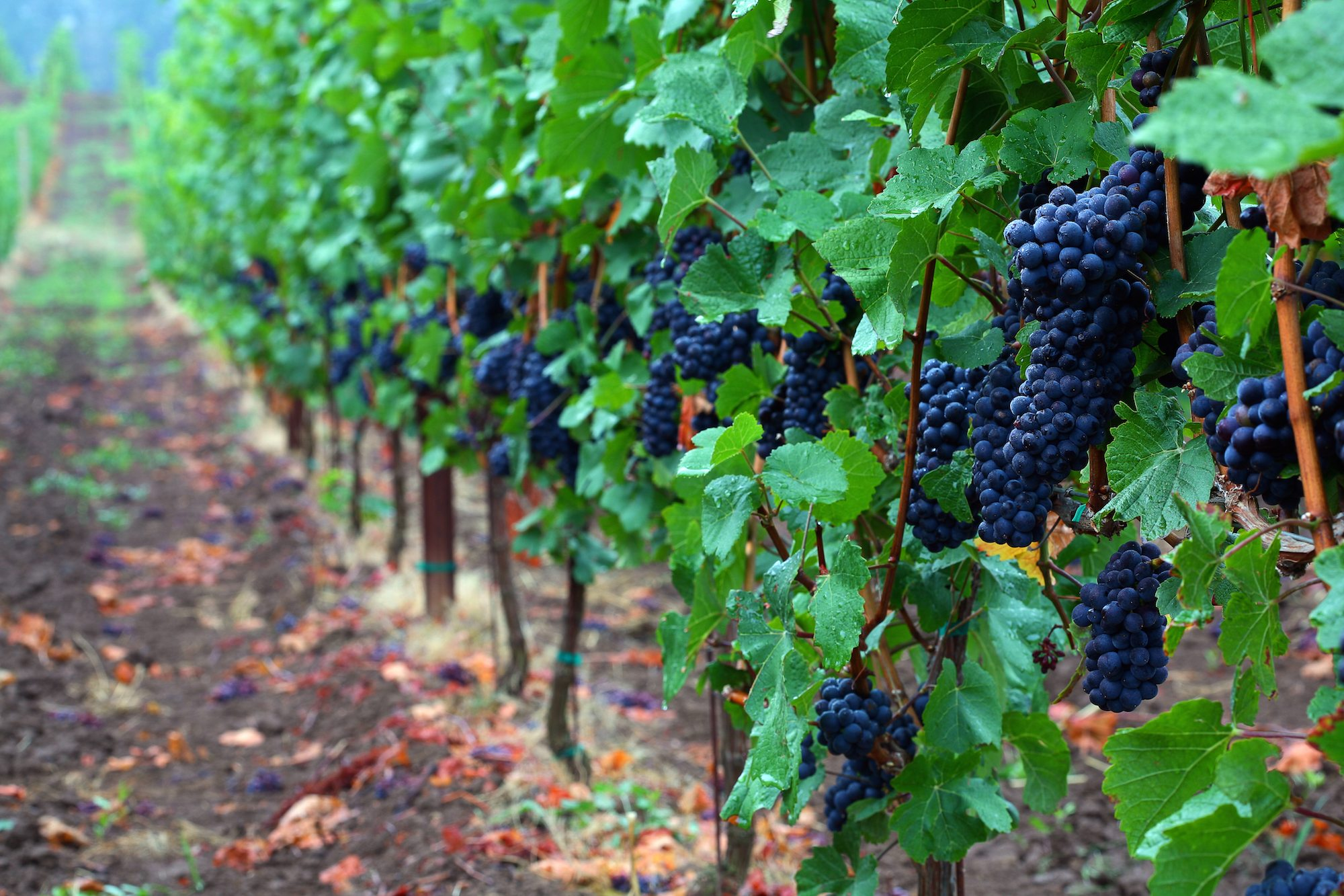 Top Wine Destinations to Savor
