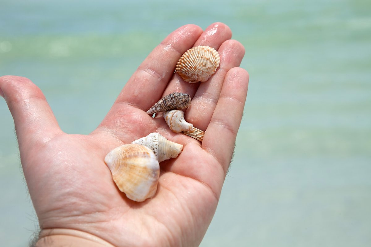 Best Beaches for Seashells