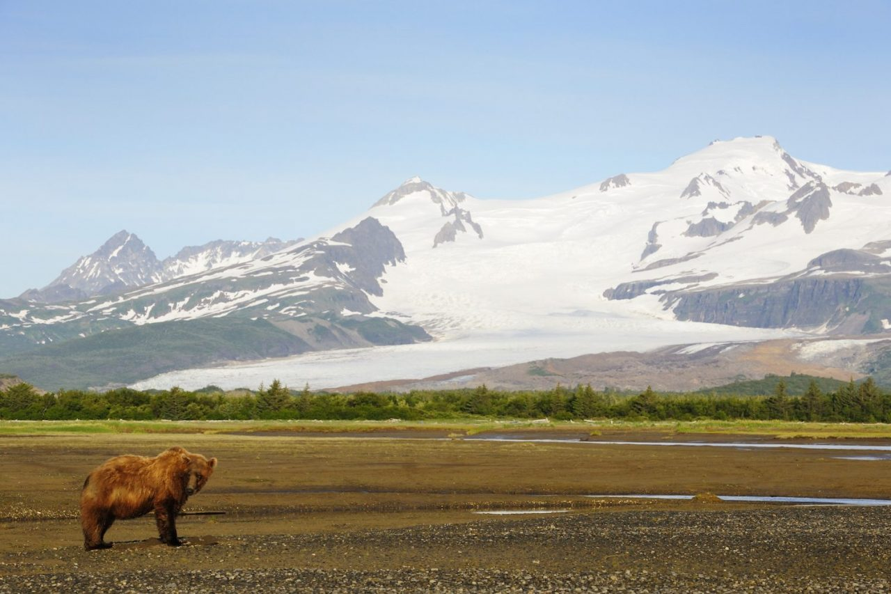 View Bears and Volcanoes at Alaska's Katmai National Park