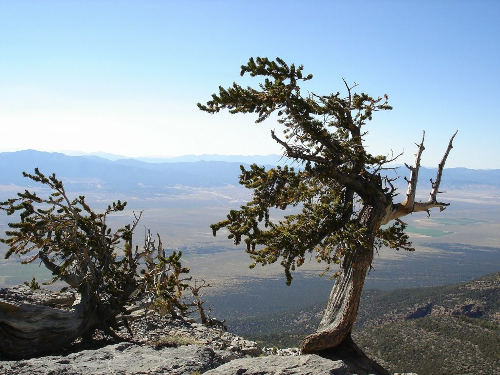 View from Great Basin National Park