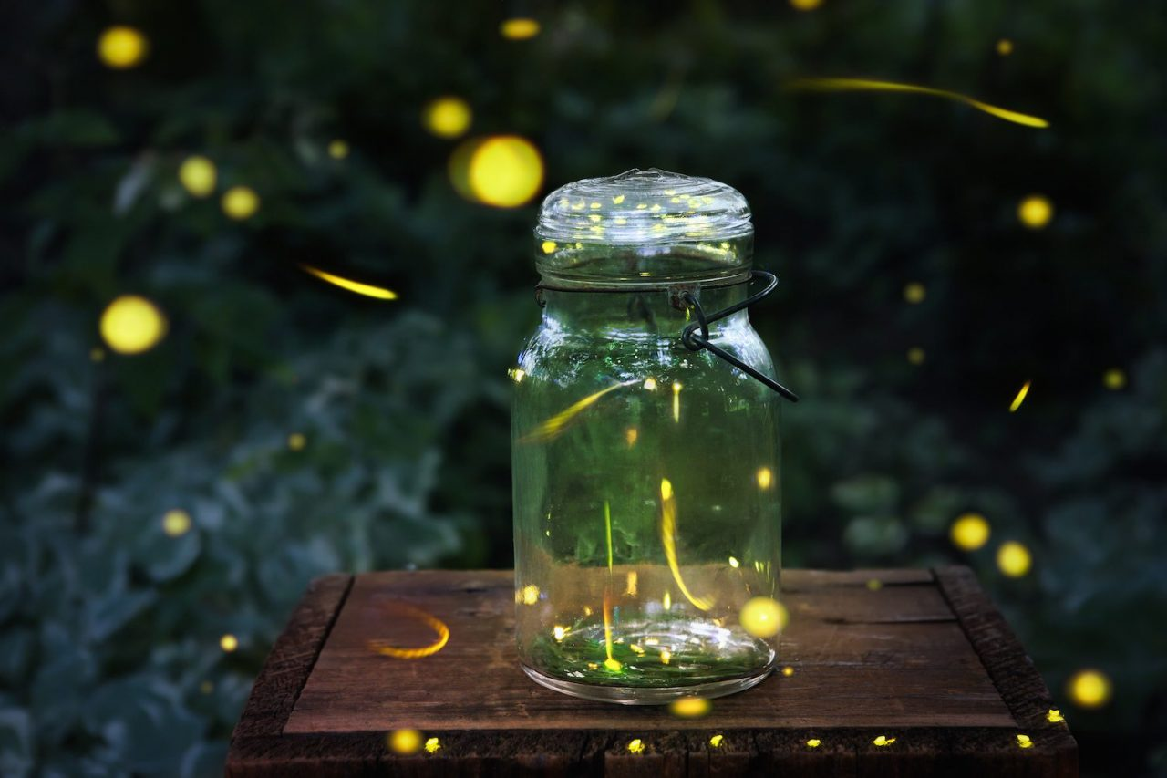 The Best States to See Fireflies