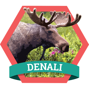 See the highest peak in the United States, Mount McKinley, and experience incredible wildlife when you climb, hike, and drive Denali National Park.