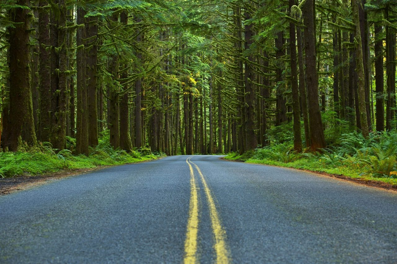 Drive the Olympic Peninsula Loop