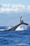 Whale Watching Destinations