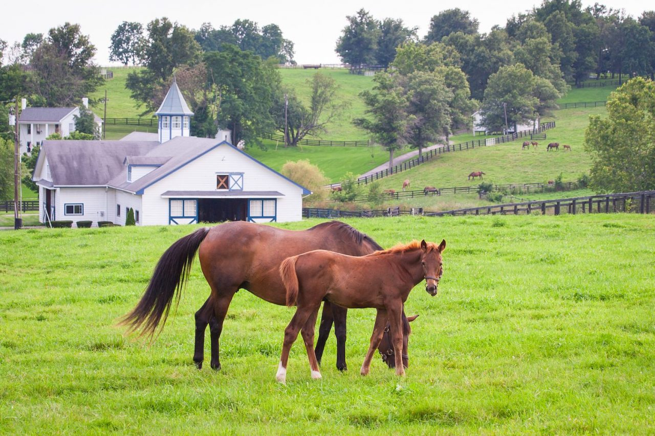 Bourbon, Horses, and National Parks: A Kentucky Road Trip