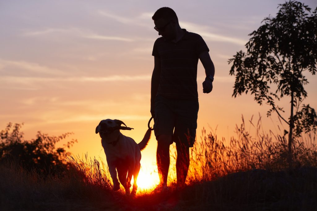 Man walking dog at sunset