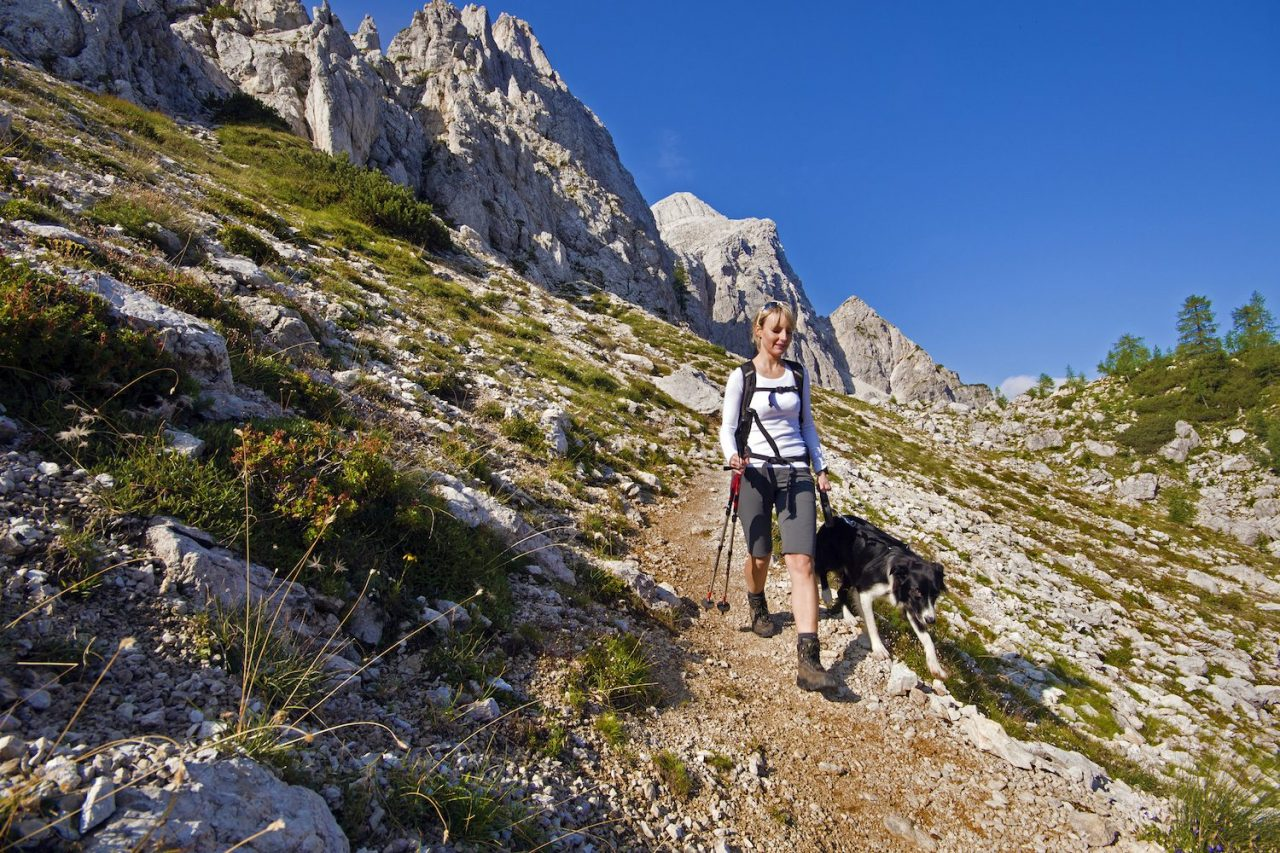 The 5 Best National Parks to Bring Your Dog