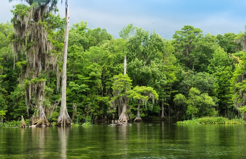 Wakulla Springs State Park and river is one of the largest and deepest freshwater springs in the world.
