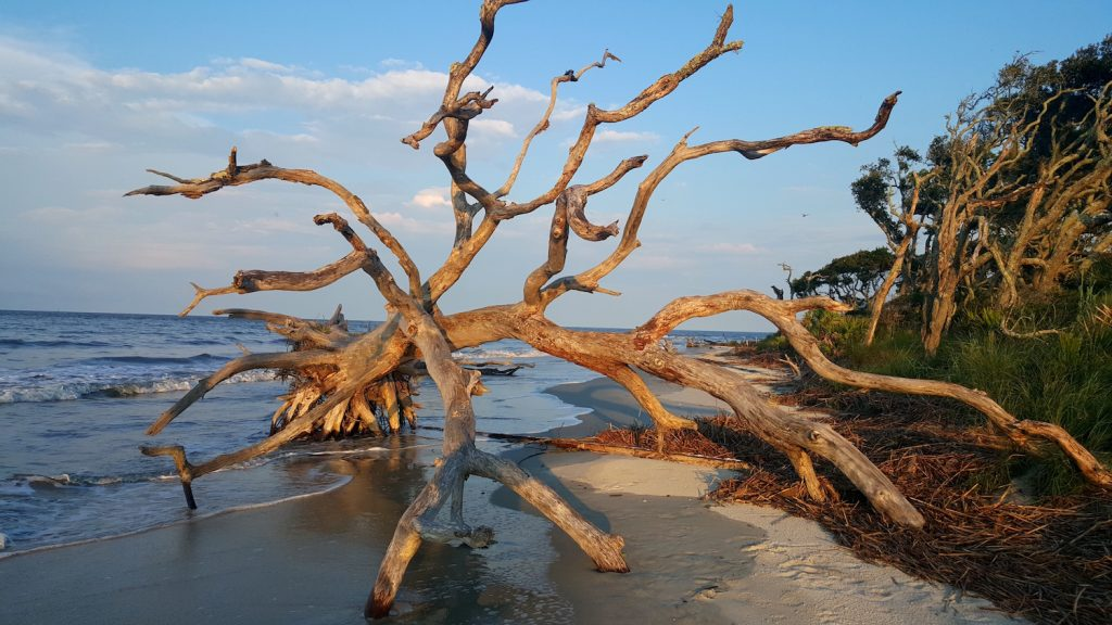 Driftwood Beach on Jekyll Island in the Golden Isles of Georgia