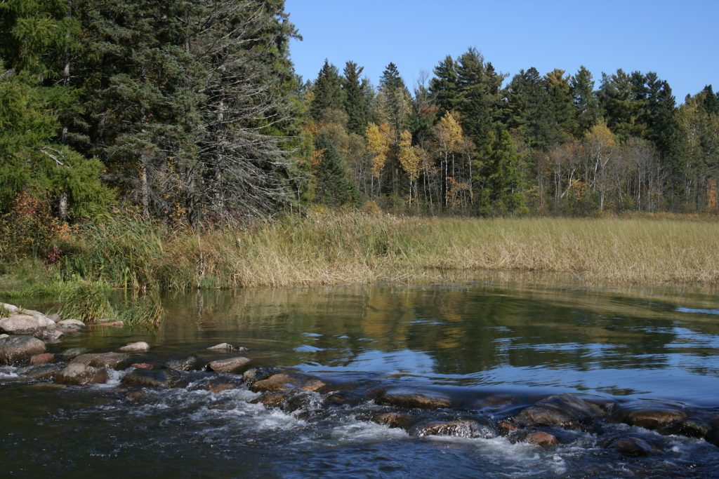 Catch a glimpse of the Mississippi River at it's headwaters in Itasca State Park, Minnesota