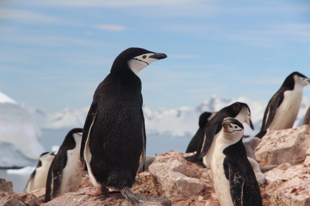 Best Zoos to See Penguins