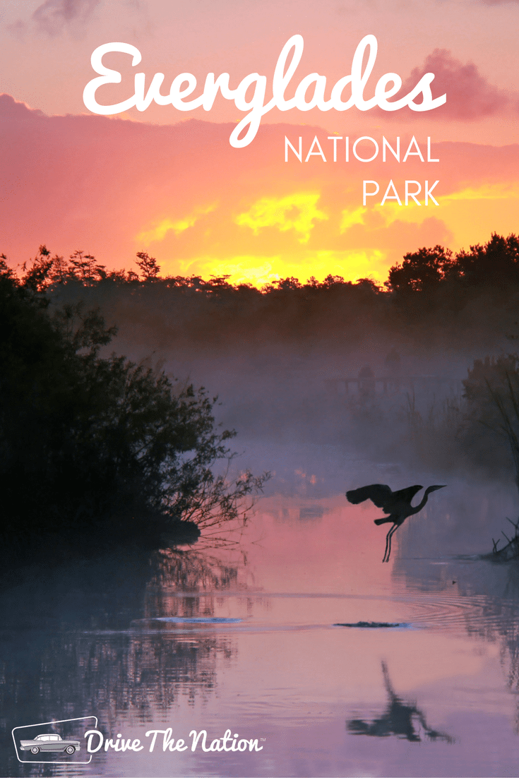 Crocodiles, manatees, and dolphins are just a few animals you might see on a boat tour of the Everglades!