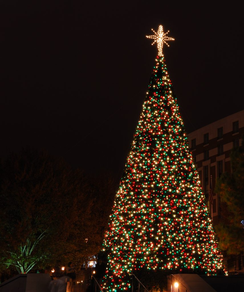 Christmas tree in park with sparkling lights