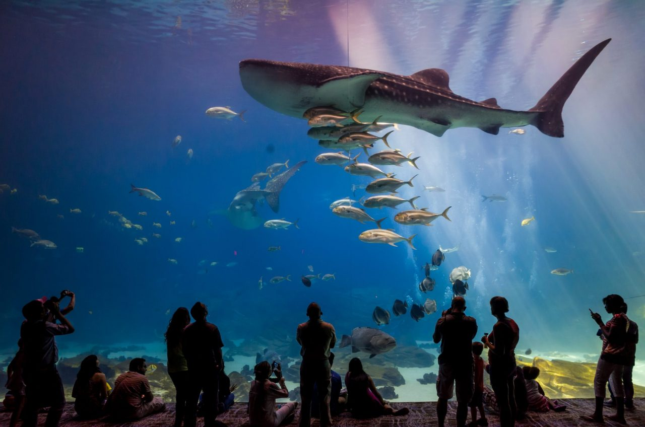 5 Best Aquariums to See Sharks