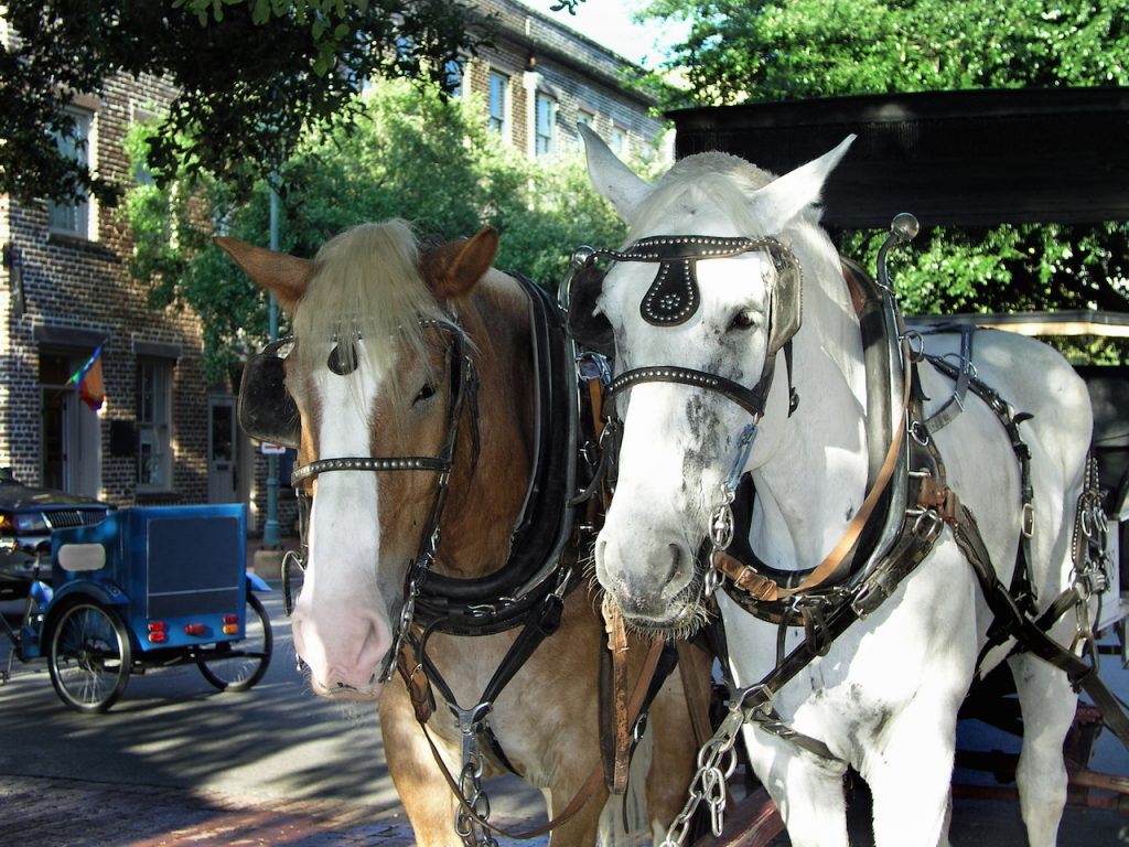 Two horses with a carriage waiting to give a ride