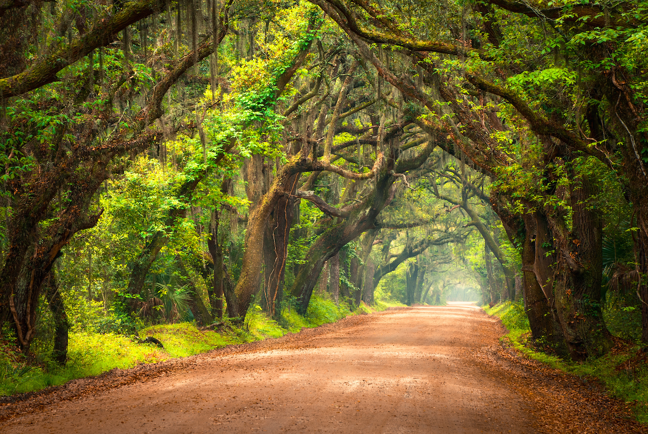 Tree Lined, live oaks, Dirt Road in Charleston, South Carolina. Edisto Island, SC