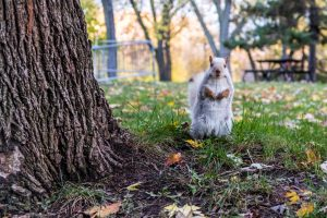 white squirrel standing up next to a tree