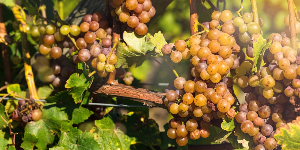Guide to Michigan Wineries