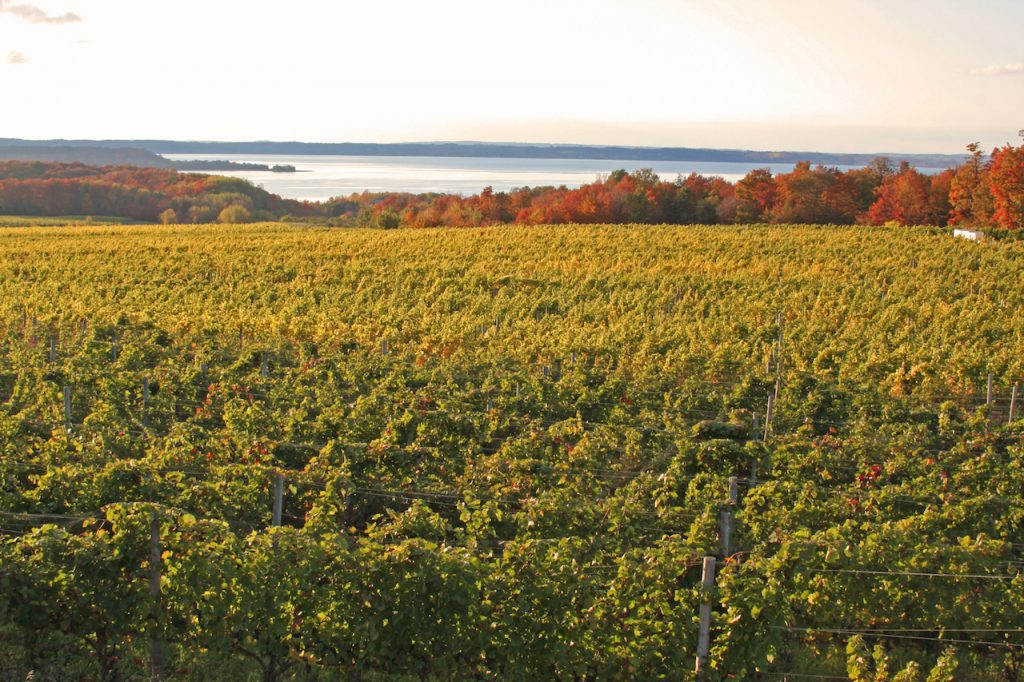 A vineyard next to Grand Traverse bay Michigan