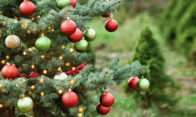 Five Festive Christmas Tree Farms