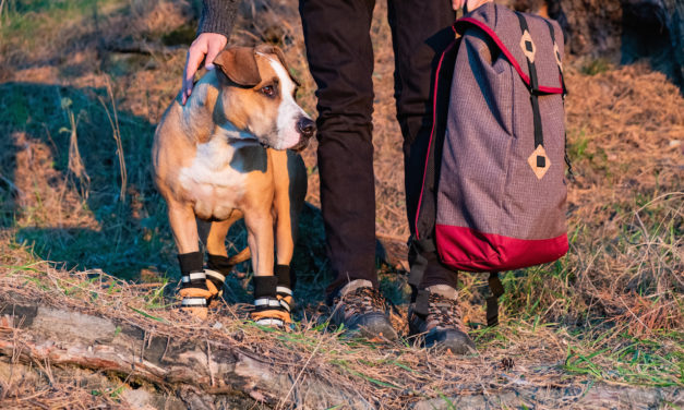 Places to Hike with Your Dog