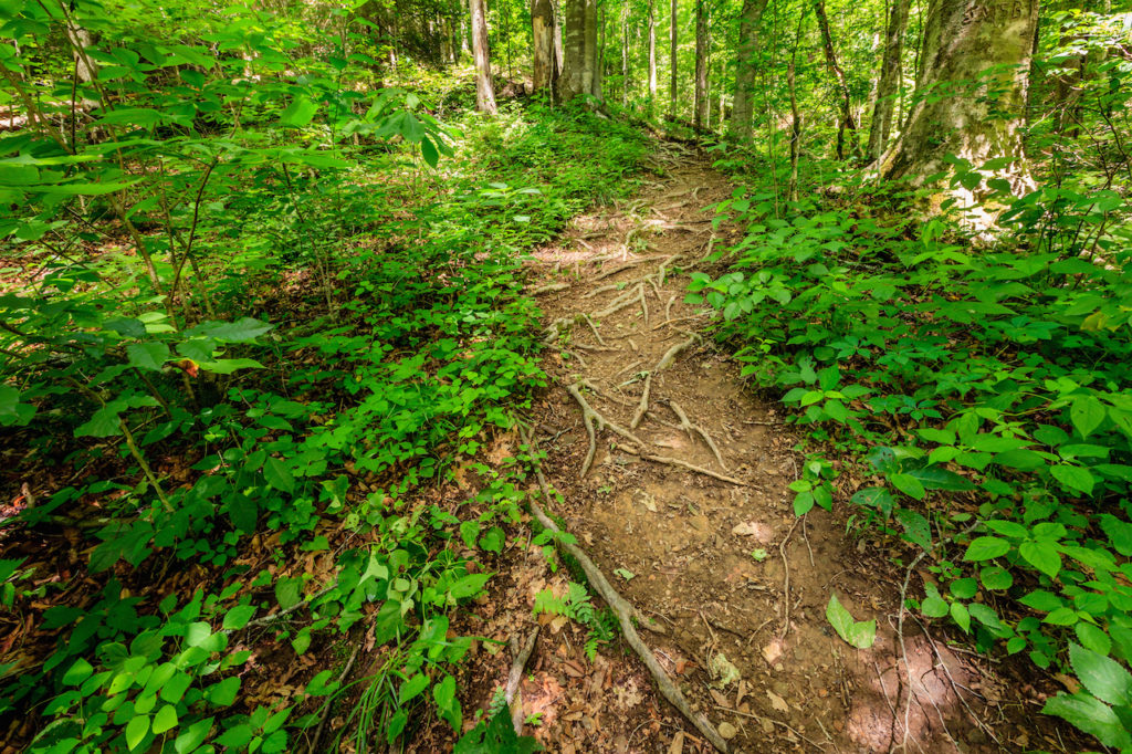 green pathway inside of Daniel Boone National Park in Kentucky