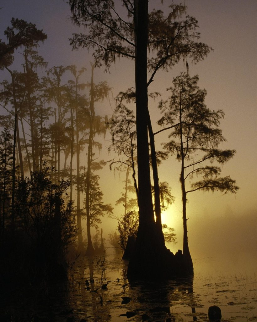 sunset in the Okefenokee Swamp in Geogia