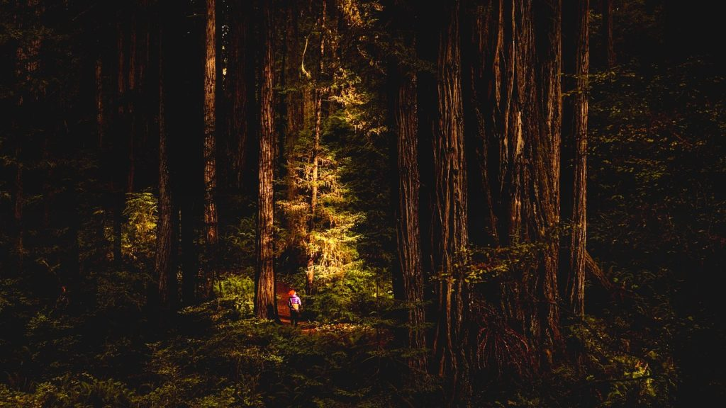 small child standing in the redwoods, California