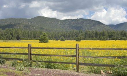 Quick Guide to Flagstaff, Arizona