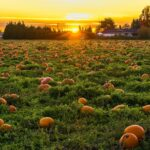 Best Pumpkin Patches in the Northeast