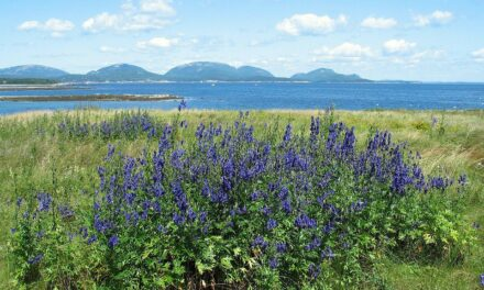 5 Northeast Scenic Drives During Spring